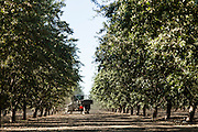 2012 August 28- Trees, fruits and nuts are photographed for FMC in Visalia, California.