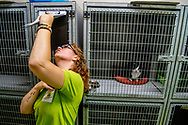 AMSERSFOORT dierenbescherming serie poes poezen kat katten opvang , asiel. dierenasiel , ROBIN UTRECHT