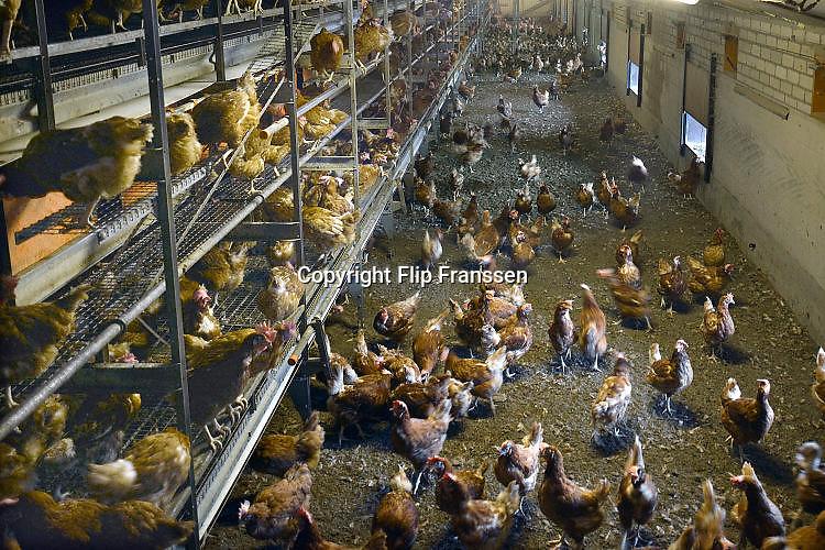 Nederland, Homoet, 1-4-2017Kippenfarm met vrije uitloop kippenFoto: Flip Franssen