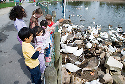 Children feeding the ducks on a visit to a city farm,