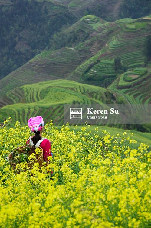Zhuang girl with canola flowers and rice terrace, Longsheng, Guangxi Province, China
