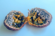 cut open ripe Passion Fruit (Passiflora)