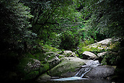 Japan, Yakushima - Mononoke forest - rocks covered with moss and mountain torrent