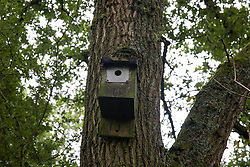 Calvert, UK. 27 July, 2020. A nesting box fixed to an oak tree at Calvert Jubilee Nature Reserve. On 22nd July, the Berks, Bucks and Oxon Wildlife Trust (BBOWT) reported that it had been informed of HS2's intention to take possession of part of Calvert Jubilee nature reserve, which is home to bittern, breeding tern and some of the UK's rarest butterflies, on 28th July to undertake unspecified clearance works in connection with the high-speed rail link.