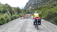 Traffic jam at Carretera Austral, Chile
