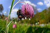 Pollinator | Bestäuber