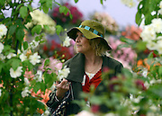 © Licensed to London News Pictures. 02/07/2012. East Molesey, UK A woman in the rose gardens. The RHS Hampton Court Palace Flower Show 2012. The show runs 3-8 July, 2012. Photo credit : Stephen Simpson/LNP