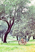 Wooden cart for harvesting cork in a forest of cork trees in Portugal.