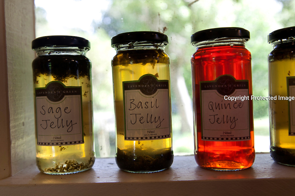 Jelly, Jam, Lavender's Green, Wairaparapa, North Island, New Zealand