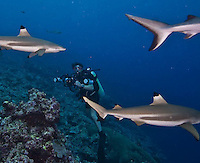Manta Fest, Colonia, Yap, Micronesia. Mantas, grey reef sharks and macro stuff. Manta Ray Bay Hotel.