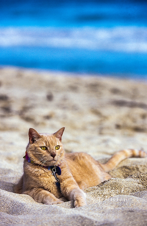 Cat relaxing at the beach