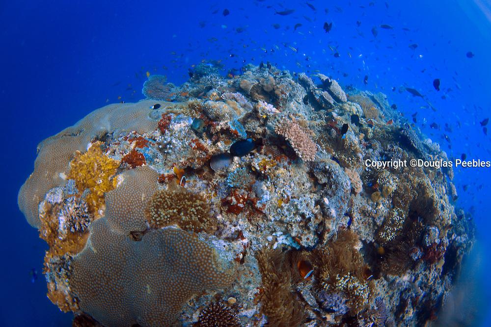 Scuba diving, Fiji