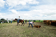 Rancher, John L. Moore, quarter horse, Simon, ropes and drags calves to fire, wrestlers work, Angie Dauben ear tags, cattle branding, Lazy TL Ranch, north of Miles City, Montana