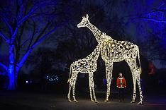 2018_11_22_Zoo_Christmas_LNP