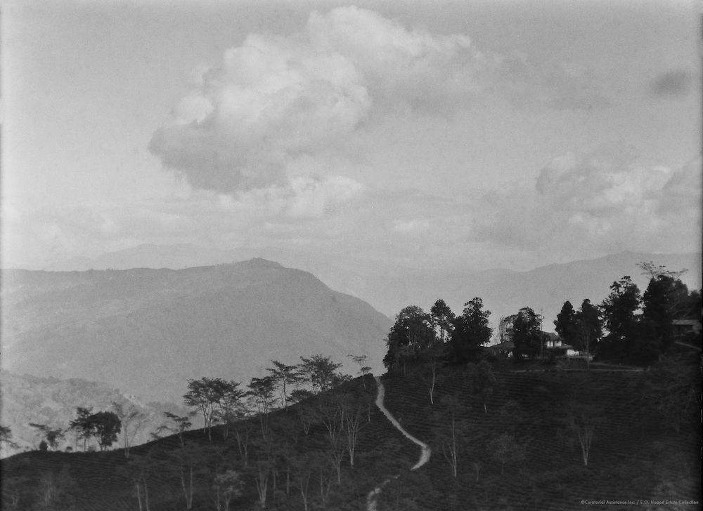 Tea Estate, Teesta Valley, India, 1929