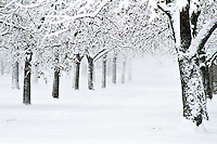 A line of trees in a winter wonderland park
