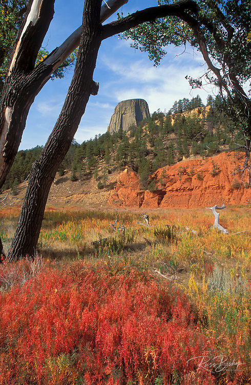 Devil's Tower, Devil's Tower National Monument, Wyoming