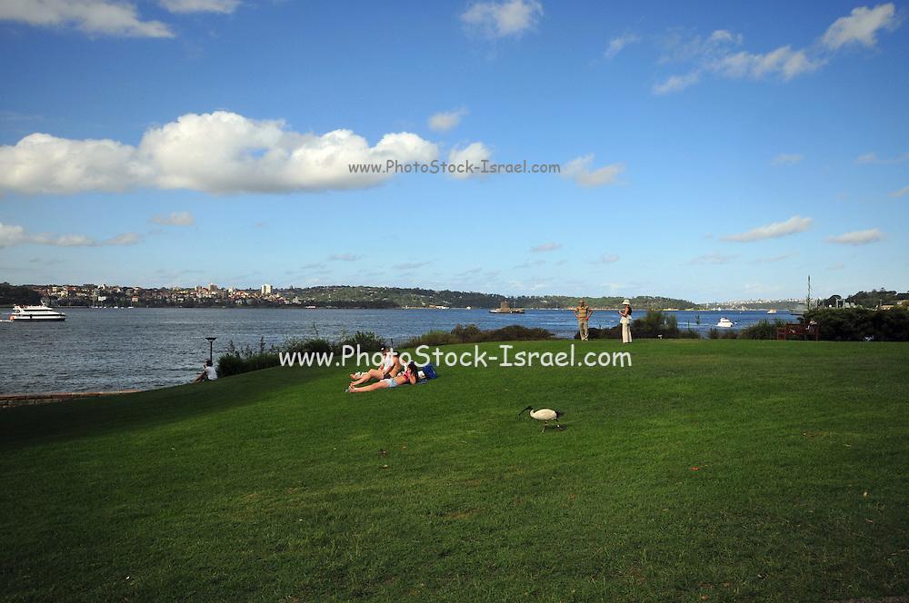 Australia, New South Wales, Sydney sunbathers in a park