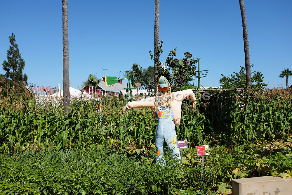 Scarecrow at the Demonstration Garden at the Centennial Farm in OC Fairgrounds