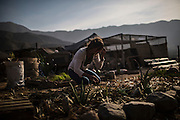 Mexican architect and volunteer Charo takes care of a small garden fed with discarded grey water used in a natural building campsite in the outskirts of  Lima, Peru, Saturday, November, 2015.