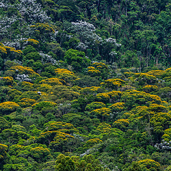 """Floresta (paisagem) fotografado no Caparaó, Espírito Santo -  Sudeste do Brasil. Bioma Mata Atlântica. Registro feito em 2018.<br /> ⠀<br /> ENGLISH: Forest Landscape photographed in Caparaó, Espírito Santo - Southeast of Brazil. Atlantic Forest Biome. Picture made in 2018."""