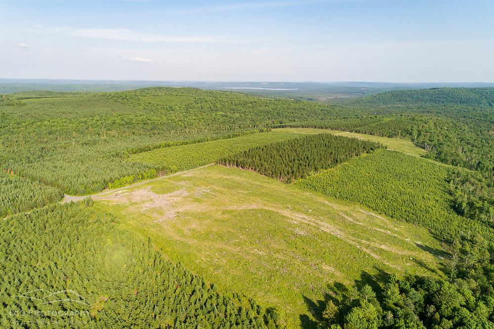 Clearcuts and spruce plantations in the industrial forest in Square Lake Township, Maine.