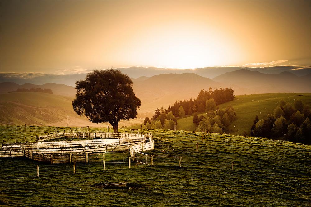 Stockyards and tree on farmland in North Canterbury, New Zealand