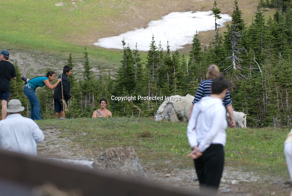 mountain goats with people