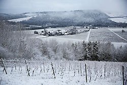 © Licensed to London News Pictures. 17/01/2016. Dorking, UK. Snow covers the Denbies Wine Estate and Box Hill. Snow has fallen in the South East for the first time this winter. Photo credit: Peter Macdiarmid/LNP
