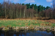 ADD2Y9 Wetland pond on River Tang and heathland with silver birch , Tangham, Suffolk, England