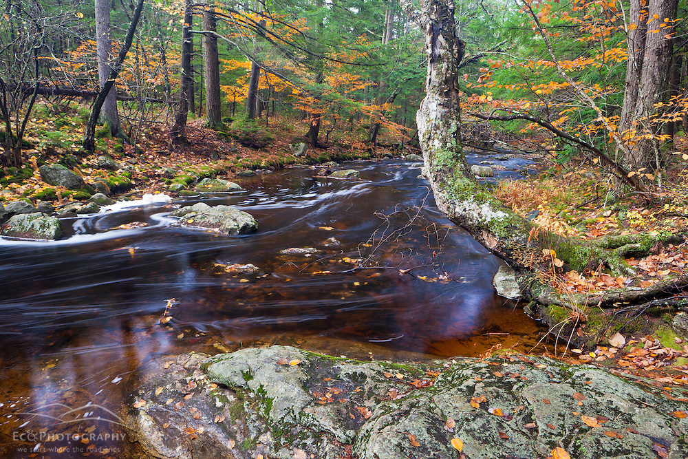 The Gridley River at the Nature Conservancy's Wales Preserve in Sharon, New Hampshire. Fall.