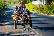 11 JANUARY 2007 - LEON, NICARAGUA:  Men haul firewood on horse drawn carts along the Pan American Highway near Leon, Nicaragua. Photo by Jack Kurtz