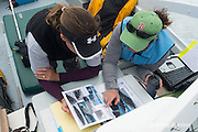 New England Aquarium researcher Heather Pettis and education programs coordinator Kara Mahoney Robinson look through a right whale catalogue to match a sighted whale aboard the NEAq research vessel Nereid in the Bay of Fundy, Canada ( North Atlantic Ocean )