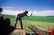 01 AUGUST 1986, BATTLE LAKE, MINNESOTA, USA: Baling hay on a dairy farm in Battle Lake, MN, Aug. 1986..PHOTO BY JACK KURTZ