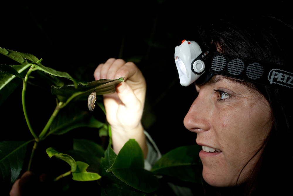 Lucy Cooke stops to admire a hanging crysallis during her search for lost frogs.