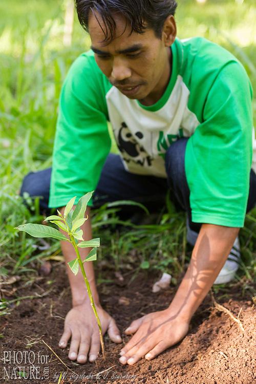 Indonésie, Petites îles de la Sonde Occidental, Lombok, WWF New Trees Project, Villageois plantant un jeune arbre dans le parc national de Gunung Rinjani // Indonesia, West Nusa Tenggara, WWF New Trees Project, villager planting a tree in the Gunung Rinjani National Park