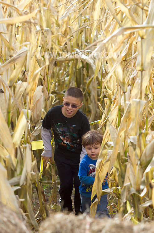 Mount Hope, New York - Two boys play in a corn maze at Pierson's Farm on Oct. 20, 2012.