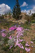 MCG spring