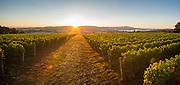 Patton Valley Vineyards, Willamette Valley, Oregon