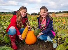 Pumpkin Patch, Kilduff Farm, 17 October 2019