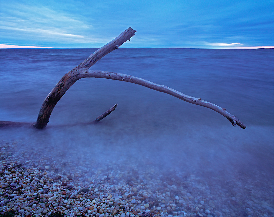 Long Island Sound, Orient, New York, North Fork, Connecticut,  Tree Branch