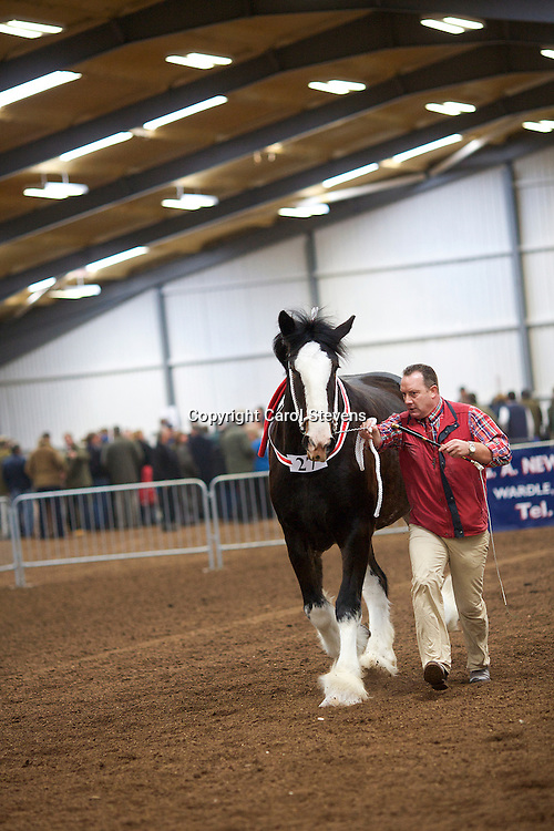 North West and Wales Shire Foal Society Show 2012<br /> Mr L M Fountain's Woodhouse Calendar Girl   f 2010   Sire  Moorfield Ted   Dam  Woodhouse Sunbeam<br /> Winner Filly or Gelding 2 years old Class<br /> Supreme Champion