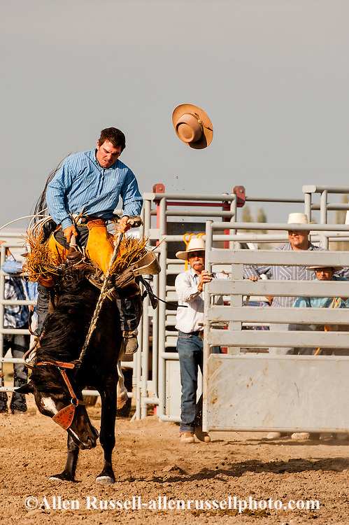 Will James Roundup, Ranch Rodeo, Ranch Bronc Riding, Taylor Hoatson, Hardin, Montana