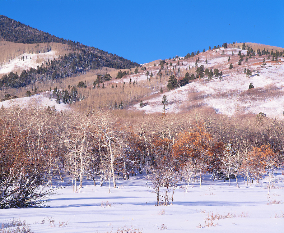 early mornigh sunlight on winter meadow on Blue Mt., Utah