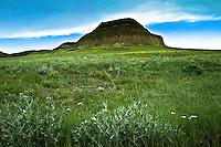 Castle Butte, Big Muddy Saskatchewan, with June flowers in foreground