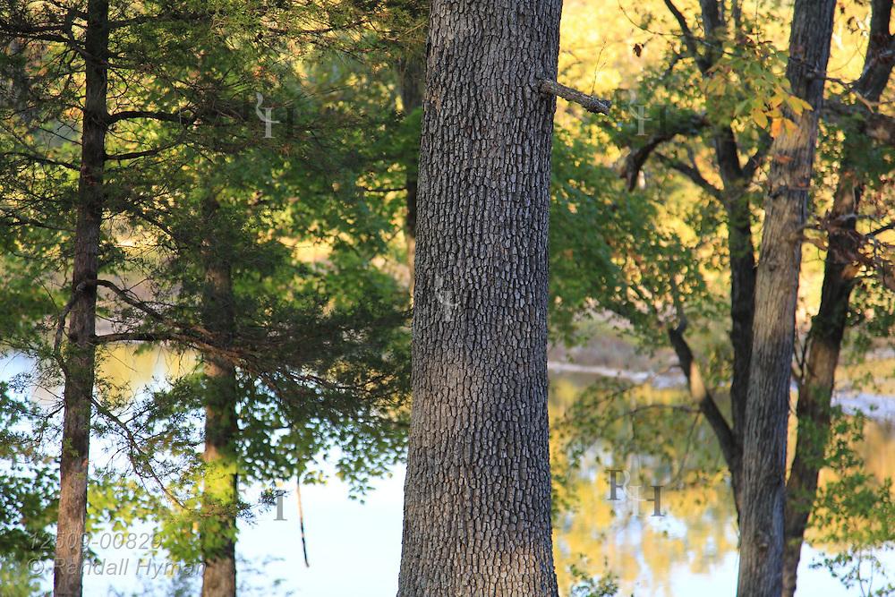 Detail of tree bark and pond at Dillard Mill State Historic Site near Viburnum, Missouri.