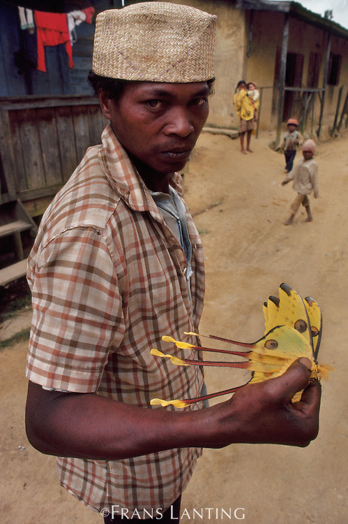 Malagasy man holding comet moths caught for sale to tourists, Eastern Madagascar