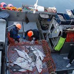 Hauling in the Catch from F/V Miss Gina, Kodiak Island, Alaska, US