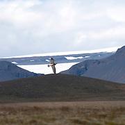 Langjokull, long glacier, in Iceland. The glacier is in central highlands.