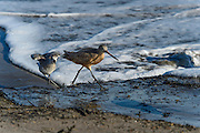 Wildlife Bird Images from the beaches at Santa Barbara, California